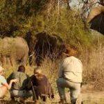 Abbigliamento safari: cosa indossare nel cuore della savana?